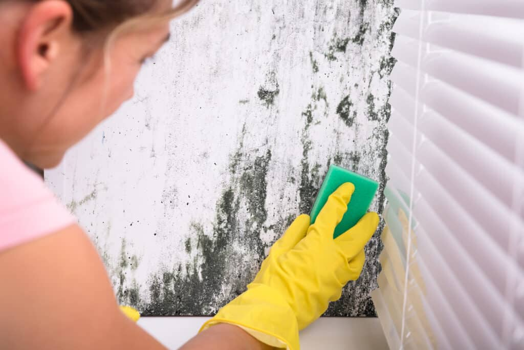 Woman wearing glove, scrubbing mold off of a wall next to a window